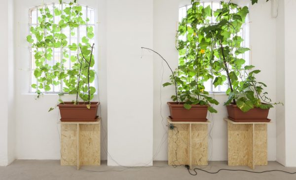 "Amy Lien & Enzo Camacho, <i>Untitled, (CyberCeramic 2 Prototype Gluck50)</i>, 2015, two-part input-output sculpture. Part one: zucca ""Marina di Chioggia,"" zucca ""bottiglia,"" and zucchini ""tromboncino d'Albenga"" plants, soil, wooden sticks, plastic planters, plastic string, chipboard tables, sensors for light, temperature and humidity, Arduino and X-Bee wireless transmitter. Part two: found terra cotta planter, hand molded refratteria terra cotta umbrella casts, joss paper collage, polyurethane spray foam, electroluminiescent wires, LED lights with fiber optic attachments, incandescent light bulbs, Arduino and X-Bee wireless receiver, code for expressing sensory input, dimensions variable. Courtesy of Gluck50. Ph. Andrea Rossetti"
